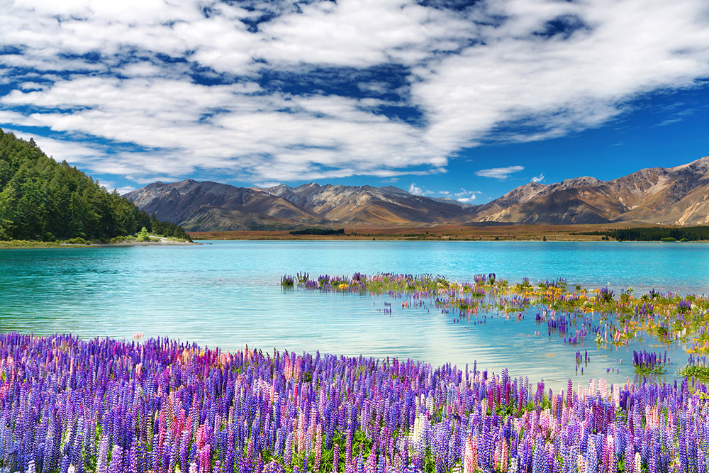 The Must-See's on New Zealand South Island