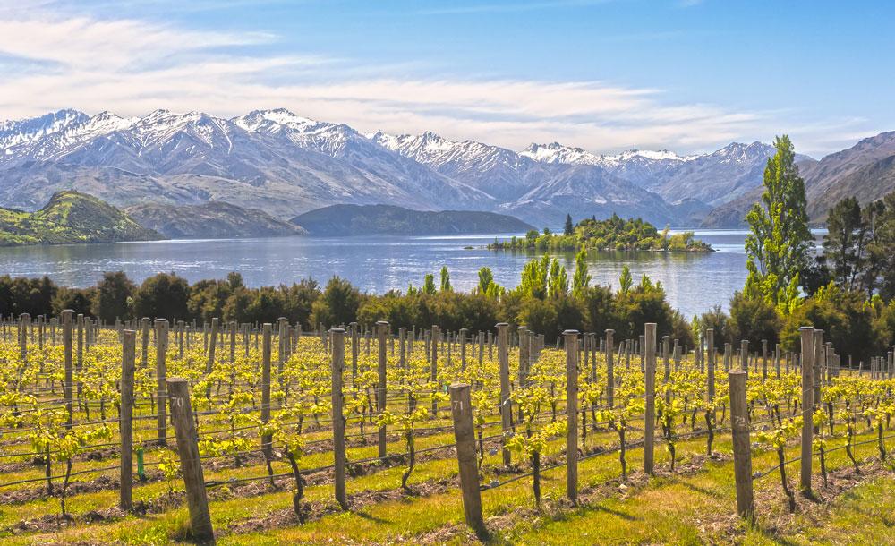 wine regions new zealand