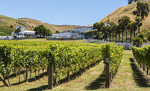 Wine regions in New Zealand