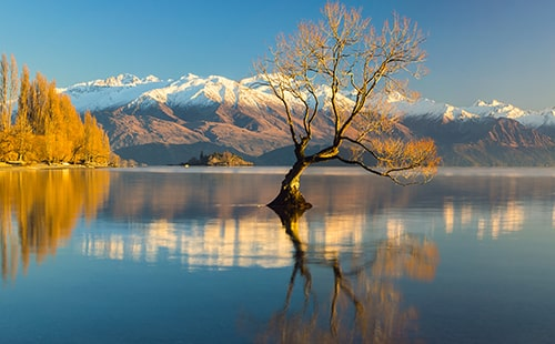 Wanaka Tree - Road Trips New Zealand