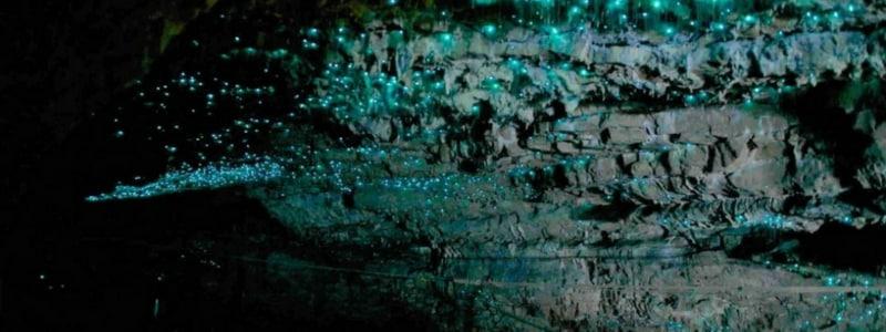 glowworm campervan new zealand