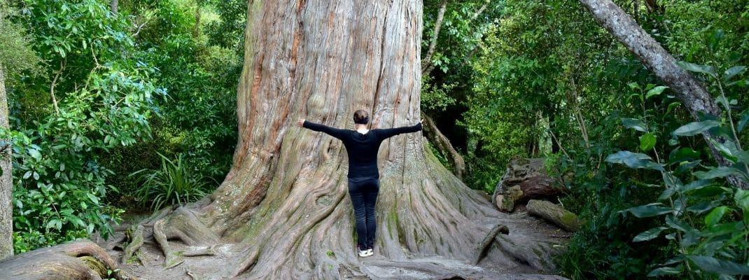woman hugging big tree