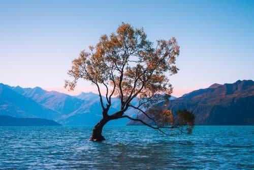 the famous wanaka tree